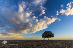 Quand le ciel s'en mêle (photosenvrac) Tags: thierryduchamp arbremarronnierpaysagecielnuagebeauceculturecouleurschestnuttreelandscapeskycloudcolorculture