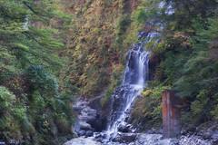 Entrance to Heaven (jasohill) Tags: life city autumn color fall nature leaves japan wall landscape photography waterfall amazing october long exposure heaven   akita tohoku yuzawa 2014 oyasukyo jasohill