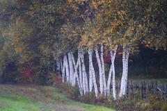 Sonnet d'Automne (Renald Bourque) Tags: autumn colors automne quebec couleur fabuleuse