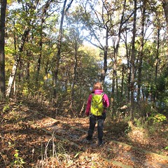 autumn trees color fall oklahoma dogs leaves hike greenleafstatepark neoklahoma