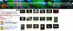 44,000 Images, 17th November 2014 - IDENTIFYING AUSTRALIAN RAINFOREST PLANTS,TREES and FUNGI Flickr Group (Black Diamond Images) Tags: screenshot rainforest 2014 rainforests australianflora 44000 australiannativeplants australianplants rainforestflora rainforestplants rainforestplant australianrainforest arfp australianrainforests australianrainforestplants idrainforestgroupmilestones australianrainforestflora arfmilestone identifyingaustralianrainforestplantstreesandfungigroup idrainforestgroup rainforestidentification 17112014 44000images 44000thimage