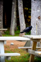 Raven (rafethahmed) Tags: bridge autumn blackandwhite bw white canada black nova novascotia selected trail scotia cabot cabottrail