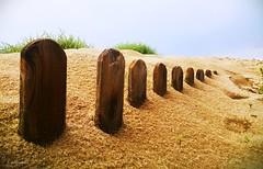 Alvarito playa (A. del Campo) Tags: autumn sky espaa naturaleza beach nature spain madera sand phone sony playa andalucia arena telfono cielo otoo marbella lt22 alvaritoplaya