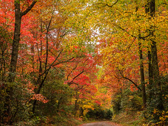 Fall leaves in the Pisgah National Forest [Explore 2014-10-13] (jimf_29605) Tags: autumn trees color leaves fallcolor northcarolina olympus zuiko brevard e5 pisgahnationalforest zd transylvaniacounty 1260mm