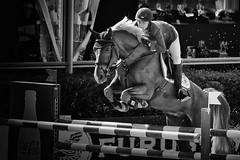 Jump (TheLionPo) Tags: barcelona bw horse sports animals blackwhite amazon equestrian animalplanet equine csio hippic hipic