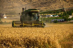John Deer (http://fineartamerica.com/profiles/robert-bales.ht) Tags: ranch beautiful wow landscape photo superb farm wheat awesome fineart grain scenic straw surreal peaceful panoramic hills idaho boise combine transportation sensational agriculture inspirational spiritual sublime magical tranquil emmett magnificent rollinghills inspiring farmequipment johndeer haybales stupendous canonshooter treasurevalley gemcounty farmlandscape emmettphotography farmphotography idahophotography americanphotograph emmettvalley sceniclandscapephotography robertbales northamericanphotography