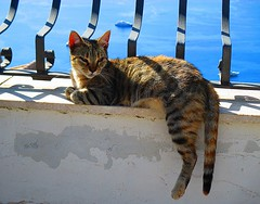 Chillin'....Sicilian life....Taormina. (Stella Trooster, Photography is life.) Tags: cat sicily taormina