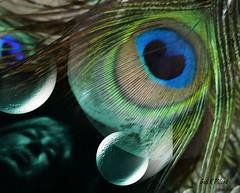 Magic Season (gailpiland) Tags: macro reflection art halloween face mystery magic feather selfie gailpiland