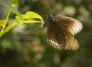 butterflies-02723
