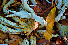 And They Fell... (DigitalLUX) Tags: park autumn color fall nature leaves october colorful miami 2104