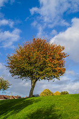 Autumn Tree (Travels with a dog and a Camera :)) Tags: park uk blue autumn england sky southwest west macro tree art digital bristol october pentax south bluesky ii di if af tamron xr 56 ld lightroom 2014 18200mm k30 f3563 netham asperical justpentax pentaxart nethampark pentaxk30 tamronaf18200mmf3563xrdiiildaspericalifmacro lightroom56