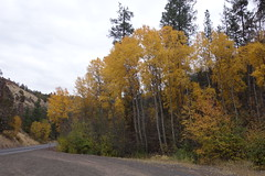 070 Aspen Trees Changing Color. (scottwwwwwww) Tags: steensmountains alvordhotsprings