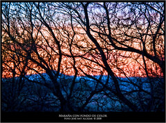 "Maraña con fondo de color • <a style=""font-size:0.8em;"" href=""http://www.flickr.com/photos/15452905@N02/15425032357/"" target=""_blank"">View on Flickr</a>"