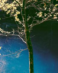 allure (itawtitaw) Tags: blue autumn light lake color reflection tree 120 mamiya film nature water leaves sunshine silhouette contrast analog reflections dark golden colorful kodak smooth tranquility scan foliage clear bark gradient epson ripples blätter portra rz67 c41 blautopf blaubeuren 180mm portra400 v700 tetenal rz67pro