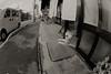 dazzling (Takeshi Nishio) Tags: uv 動物 イヌ ilfordfp4plus nikonfm3a 白黒 フィルム 16mmfisheye ネガ ei125 spd1120deg7min filmno796
