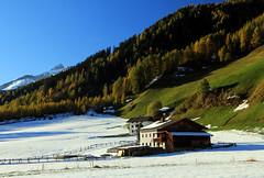 der erste Schnee im Pfitschtal (mikiitaly) Tags: schnee italy herbst wald südtirol pfitschtal