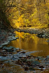 It's All Yellow (Sine--Qua--Non) Tags: statepark park autumn fall indiana cliftyfalls sonya77 sal1650 sony1650