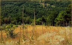 "El final del Verano - Τέλος του Καλοκαιριού (jose luis naussa (+3-3 millones)) Tags: paisaje otoño colorido coth fantasticnature saariysqualitypictures greatshotss ""flickrtravelaward"""
