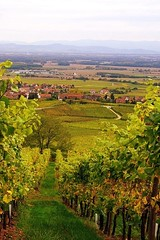 Le vignoble d'Alsace (France) (mamietherese1) Tags: nature sensational magicalmoments tistheseason world100f phvalue imagesforthelittleprince creativeoutbursts magicalmoments2