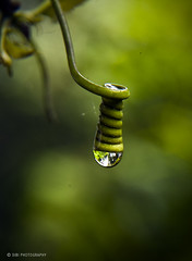 The last drop... (sibi ar) Tags: nature spring waterdrop kerala mansoon sibiar sibiphotography
