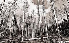 deadwood // saxon switzerland (Das halbrunde Zimmer) Tags: wood cloud mountains nature fog canon germany deutschland nebel herbst natur german idyll autumm elbsandsteingebirge naturepoetry nationalparksächsischeschweiz sächsischböhmischeschweiz saxonczechswitzerland