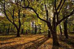 DSC_5797 [EXPLORED] (Ray Skwire) Tags: park autumn trees fall colors woods pennsylvania explore pa neshaminystatepark explored