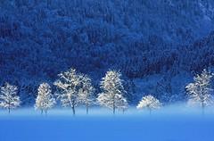 """Schwangau D """"Foschie Mattutine"""" (Fabrizio Lucchese 1') Tags: schwangau deutschland germania bayern winter neve snow alpi montagna baviera canon450d inverno fabriziolucchese снег schnee"""