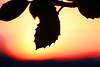Evening Peaks (Rolf-Schweizer) Tags: life autumn light red game cold flower color colour art canon landscape evening licht flickr heaven frost artist colours fotografie heart kunst c herbst creative himmel romance line r getty keystone crow landschaft lds emptiness leben gettyimages epa farben appenzell romantik gettyimage artphotography einfach landscapephotography lookingforajob hoffeld auffrischen hganimalsonly ringexcellence rolfschweizer rolfschweizerphotography rolfschweizerfotografie rolfschweizerstgallertagblatt