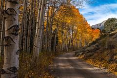 Eyes In The Aspens (Darvin Atkeson) Tags: road autumn trees mountains color fall forest eyes grove walk nevada hike sierra bark mammoth aspen leevining darvin junelakeloop darv lynneal yosemitelandscapescom