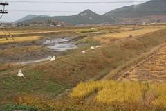 2014 Oct North Korea trip DPRK  (2444) (Lawrence Wang ) Tags: trip korea korean northkorea nk pyongyang dprk  northkorean