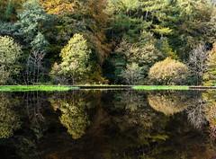DSC_0075- Gibson Mill pond - Explored! (SWJuk) Tags: uk autumn trees england reflections nikon unitedkingdom britain yorkshire autumncolours gb autumnal westyorkshire millpond lightroom hebdenbridge 2014 hardcastlecrags gibsonmill d7100 rawnef swjuk nikond7100 oct2014