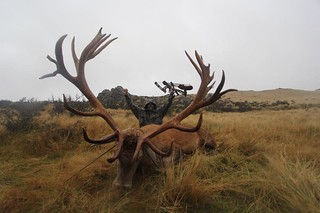 New Zealand Red Stag Hunting - Christchurch 44