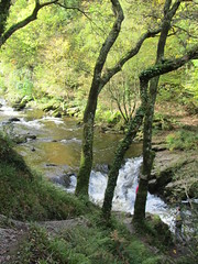 UK - Devon - Near Lynmouth - Watersmeet - River Lyn (JulesFoto) Tags: uk england devon nationaltrust lynmouth watersmeet exmoor riverlyn