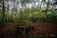 Sur le bout du banc.. (LDigeon) Tags: autumn automne vert arbre fort laurent feuille digeon ldigeon