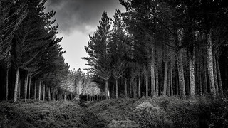 Blackberry forest