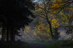 First Day in November 2014 III (boettcher.photography) Tags: november autumn trees fall nature forest germany deutschland path herbst wald bume weg raysoflight pfad neckargemnd dilsberg badenwrttemberg lichtstrahlen rheinneckarkreis sashahasha boettcherphotography