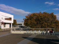 Lunch time (tripu) Tags: november autumn tree beautiful japan campus back student chair warm university sitting break sunny kanagawa sfc shonan fujisawa keio shonandai 2014 keiouniversity shonanfujisawa