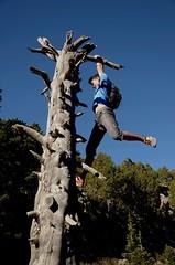 strong (Rose Grenobloisedadoption) Tags: climbing tree chamrousse french alpes