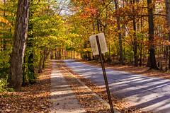 Hilton Area (11-10-16)-001 (nickatkins) Tags: fall fallcolors fallcolor fallfoliage autumn water sun sunlight stream