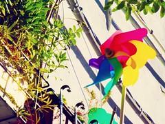 (Luca3803) Tags: italy pinwheel pinwheels girandole place alleys alley colors color plant plants railing railings ringhiere ringhiera piante pianta colori colore vicolo vicoli piazza girandola italia