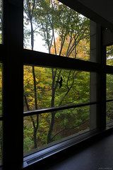 DSC07456 (sesquiotic) Tags: foliage fallfoliage ontariosciencecentre