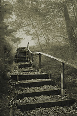 Blind Staircase (wibblux) Tags: stair forest tree fog