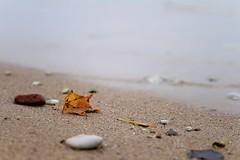 One leaf on a beach (Cristy McAuley) Tags: leaf beach sand autumncolor orange rock lake
