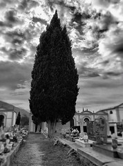 Silence n3 (lauramacri1) Tags: sky architecture cloudsky builtstructure buildingexterior outdoors tree silentmoment silence quiet cimitery nopeople spirituality religion sculpture statue death men realpeople nature day oneperson people