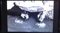 Viherniemenkatu 9 (neppanen) Tags: sampen discounterintelligence helsinki helsinginkilometritehdas suomi finland suomifilmi elokuva pekkajaptk pekkajaptklumimiehenjljill kuvauspaikka viherniemenkatu hakaniemi