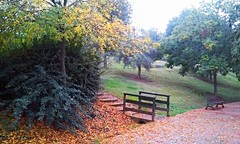 Falling (Frantastic.) Tags: garden plant rboles tree trees outdoor outdoors leaf leaves hoja hojas fall autumn otoo wood madera bridge puente cceres extremadura spain espaa europe europa south sur park parque rodeo green verde cloudy cloud nublado covered bench banco landscape paisaje
