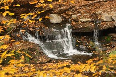 IMG_9258 (Sally Knox Sakshaug) Tags: letchworth state park new york fall autumn october colors leaf leaves orange yellow stone grey gray brown green red beautiful pretty scenic waterfall water white spectacular falls beauty genesee river portagecanyon closeup wolf creek area small delicate simple quiet
