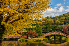 (Mori.Kei) Tags: autumnleaves  yokohama     bridge reflection