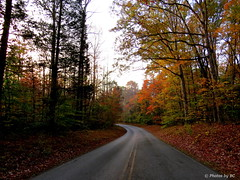 Road in the park. (Explored) (~~BC's~~Photographs~~) Tags: bcsphotographs canonsx50 mammothcavenationalpark kentuckyphotos autumn road trees ourworldinphotosgroup earthwindandfiregroup explorekentucky explored11292016220