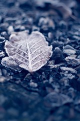 frosted fallen leav (1 von 1) (michaels__photos) Tags: frost winter frozen leav cold ice structure